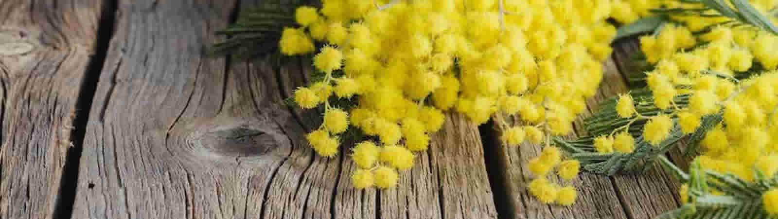 evento in erboristeria monghidoro per l'8 marzo con eversus natura e ant