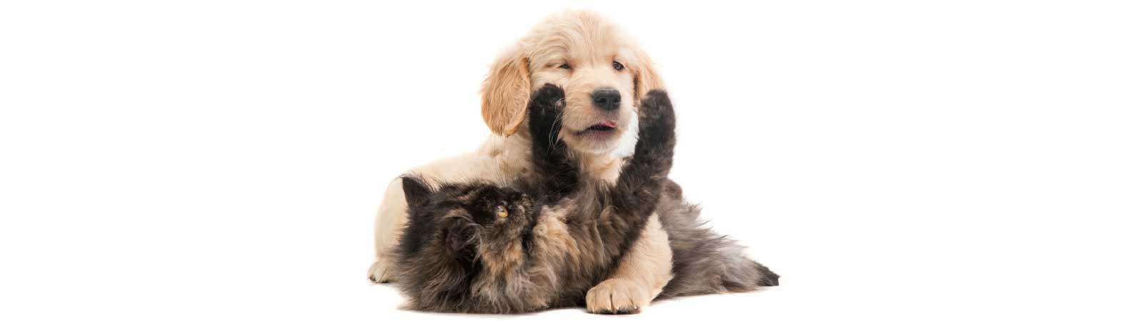 cibo cani gatti